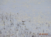 south-boston-water-fowl