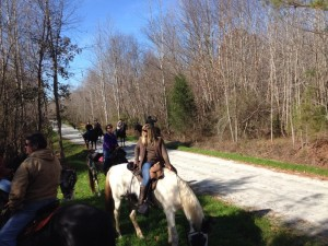 Horses on Tobacco Heritage Trail
